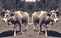 Retro Kuh Trennung by kattobello
