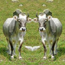 Kuh Zwillinge von kattobello