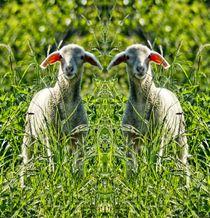 Lämmer Zwillinge von kattobello