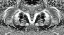 Retro Meerschweinchen Zwillinge von kattobello