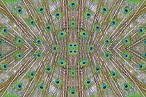 Pfaunefedern 2 von kattobello