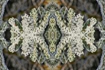 Eiskristalle 1 by kattobello
