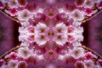 Kirschblütenträume 2 von kattobello