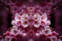 Kirschblütenträume 3 von kattobello