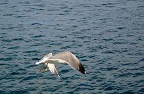 Abflug einer Seemöwe by art-dellas