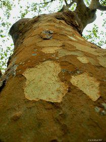 Baum Perspektive III von art-dellas