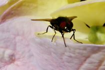 Fliege by art-dellas