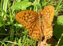 Schmetterling II by art-dellas