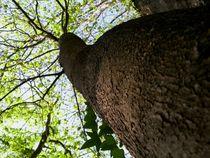 Baum Perspektive II by art-dellas