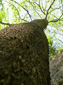 Baum Perspektive I by art-dellas