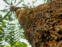 Palmfarn von art-dellas
