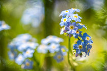 Please forget me not by Nicc Koch