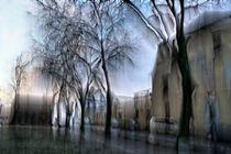 WIND ROSEN DUFT by David Renson