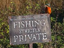 Kingfisher 01 von Bill Pound