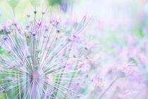 Aus dem Garten von Anne Madalinski