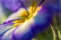 Colourful von Nicc Koch