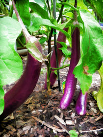 Long Purple Eggplant von lanjee chee