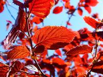 Rote Blätter im Sommerwind. by Zarahzeta ®