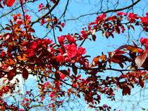 Zarte rote Blüten. von Zarahzeta ®