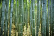 Bambus, Bamboo - Japan Kyoto by art-adisan