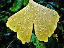 Ginkgo-Blatt mit Regentropfen by assy