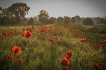 Landschaft mit Klatschmohn by Christine Horn