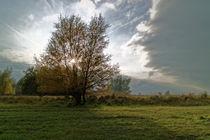 Baum im Licht von ropo13