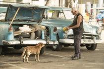 Cuban doggy feed  von Rob Hawkins