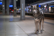 Ninja waiting for the train by Michael Goeller