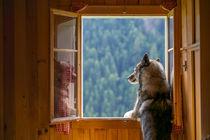 Ninja in a mountain cabin by Michael Goeller