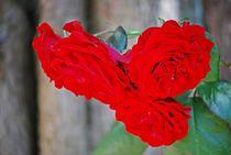 gefüllte Rosen... 5 by loewenherz-artwork