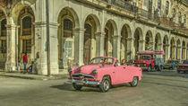 Pink Crestliner  by Rob Hawkins