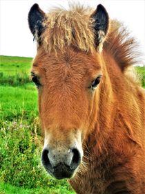 Pony-Fohlen-Portrait von assy