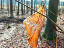 herbstblatt im vorfrühling by hedy beith