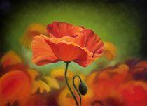 Poppy flower von Galyna Schaefer