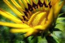 Sommer-Gelb von Nicc Koch