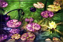 Seerose by mario-s