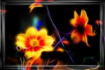 Blüte von mario-s