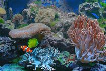 Unter Wasser von mario-s