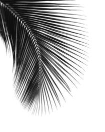 PALM LEAF black & white von nordik