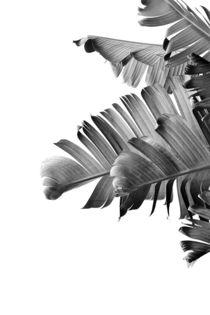 Banana leaves Black & White von nordik