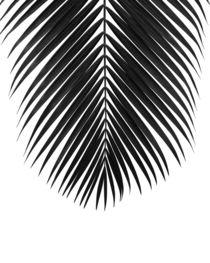 PALM LEAF minimalist by nordik