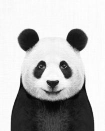 PANDA by nordik