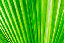 Palm leaf background by Kevin Hellon