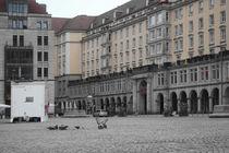 Dresden_04 - Tauben by André Schuckert