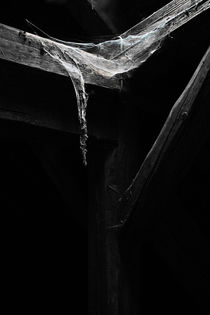Spinnenweben von André Schuckert