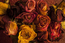 Life Cycle of Roses von Jim Corwin