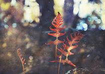 Botanica by Karen Black