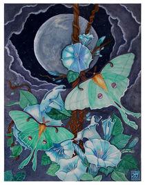 Vida de la Luna by Sandra Gale