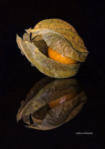Physalis by Ingolf Preu